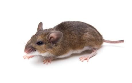 K global d ratisation paris d sinsectisation - Eliminer les cafards ...